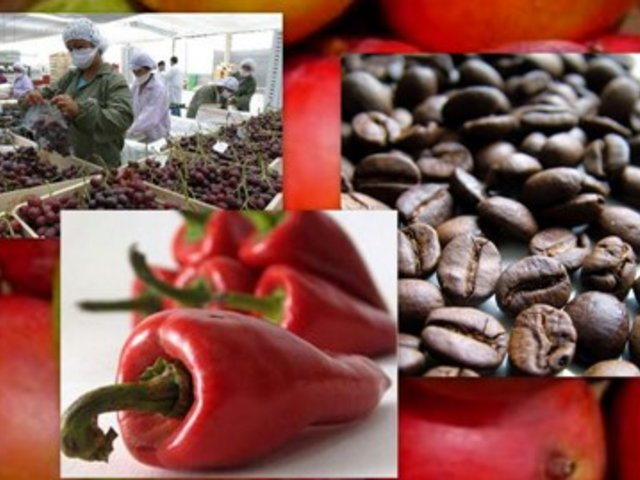Agroexportaciones superarían este año los US$ 5,600 millones