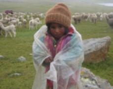 Intenso frío matan a decenas de alpacas en Huancavelica y Puno