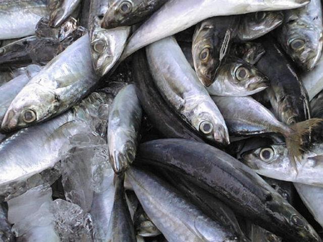 Norma del Ministerio de la Producción afectaría gravemente al sector pesquero