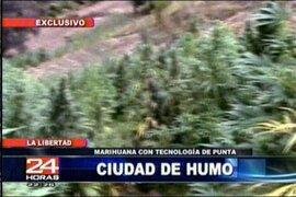 Encuentran 86 hectáreas de marihuana en La Libertad