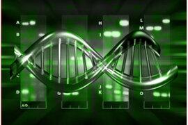 Descubren molécula que controla la sensibilidad a la radiación UVB