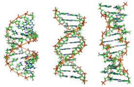 Prueba de ADN vincula envejecimiento con nivel socioeconómico
