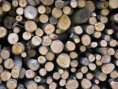 Aumenta el uso de madera para producir energía, según la ONU
