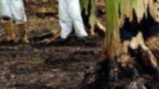 Cortes en el Oleoducto Nor Peruano afecto el área de Trompeteros