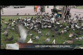 Se acentúa la restricción para alimentar a las palomas en distritos limeños