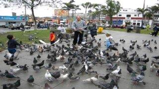 Multan con S/ 180 a cuatro personas que alimentaban a palomas en Jesús María