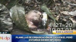 Informes oficiales sobre erradicación de la hoja de coca estarían siendo inflados
