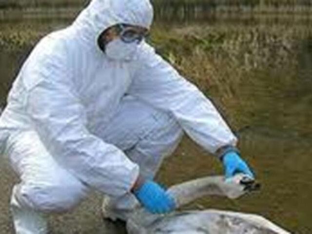 OMS lanza advertencia sobre estudios del virus H5N1