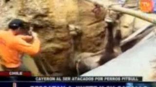 Jinete y su caballo cayeron a abismo tras ser perseguidos por perros pitbull