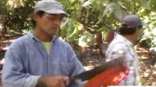 El Cacao más fino y aromático del mundo llega desde el Bolsón de Cuchara