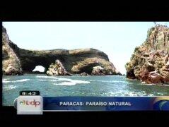 Paracas: paradisiaco destino turístico que alberga sol, playa y naturaleza