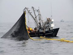 Imarpe realizará un crucero para evaluar cantidad de merluza en el litoral