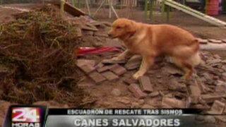 Entrenan perros rescatistas ante eventuales desastres naturales