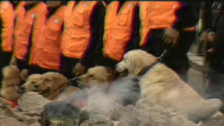 Brigada canina lista para actuar ante emergencia de sismo