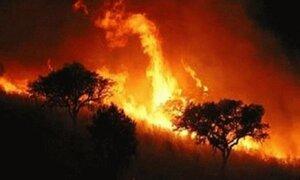 Incendio forestal arrasa con miles de hectáreas en Estados Unidos