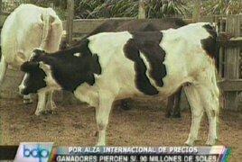 Ganaderos lecheros perdieron S/. 90 millones por alza de los precios de granos
