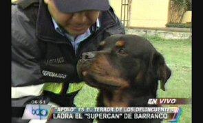 """""""Apolo"""" se ha convertido en el terror de los delincuentes en Barranco"""