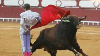 Polémica por proyecto que prohíbe ingreso de menores a corridas de toros
