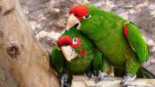 Conozca a los encantadores huéspedes del renovado zoológico de Huachipa