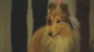 Reino Unido: investigadores logran revertir la parálisis en los perros