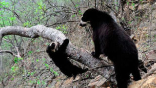 Chaparrí: un refugio de vida salvaje en territorio chiclayano