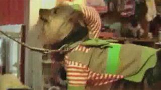 El espíritu navideño llegó también para nuestras mascotas