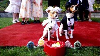 ¡Video! En Lima ya se realizan los los matrimonios caninos.