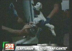 Brasil: capturan a gato que era cómplice para fugar de penal
