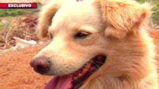 Rescatando al can chiribaya: la insólita historia detrás del 'perro chusco'