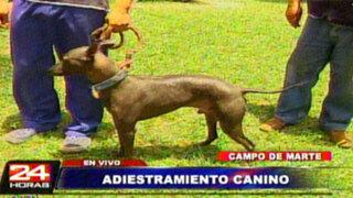 Jesús María: Aprenda como tener adiestrada a su mascota canina