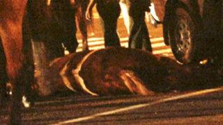 Yegua 'Lenka Star' atacada por vándalo murió y policía se recupera