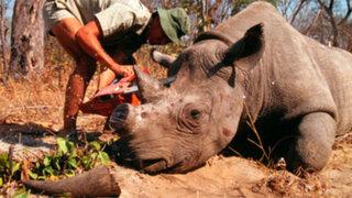 Caza indiscriminada a punto de exterminar rinocerontes en India