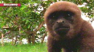 Isla de los monos: un refugio de supervivencia en la amazonía