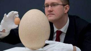 Reino Unido: Christie's subastará el huevo fosilizado de un ave elefante