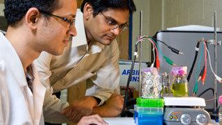 Científicos desarrollan método para captar electricidad de las plantas