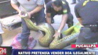 Pucallpa: traficante de animales intentaba vender gigantesca boa en 400 soles