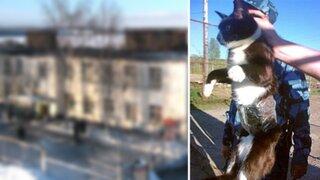 Rusia: 'detienen' a gato que intentaba ingresar celulares a una cárcel