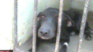 Piura: descubren fosa con 17 perros sacrificados por estudiantes de medicina