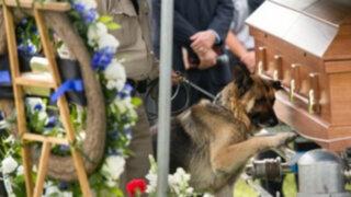 Perro policía conmovió a miles al llorar en entierro de su amo asesinado