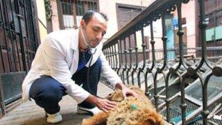 Veterinarios peruanos ofrecen 'seguro de salud' para perros y gatos