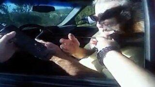 EEUU: mono muerde a policía cuando le ponía una multa a un auto