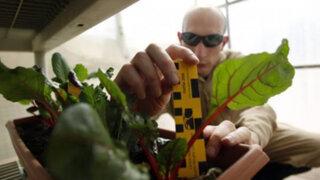 """Científicos afirman que las plantas realizan """"operaciones matemáticas"""""""