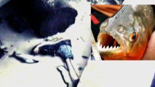 Pirañas devoraron cuerpo de pescador desaparecido en Iquitos