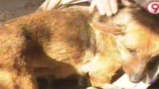 Argentina: perra salva a bebé abandonado al cobijarlo junto a sus crías