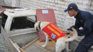 Brigada canina recibe entrenamiento especial para detectar droga