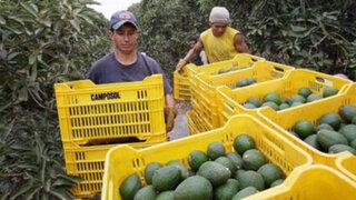 Adex: exportaciones regionales cayeron 5.2% en el primer semestre