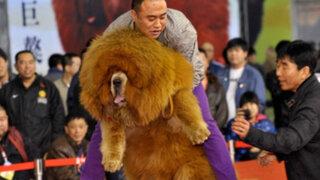 Zoológico chino engañaba a sus visitantes con perros 'disfrazados' de leones
