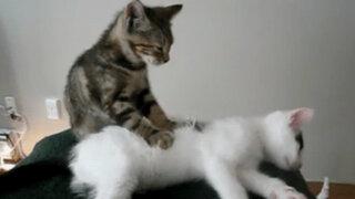 Animales curiosos: desde gatos masajistas hasta perros que bailan salsa