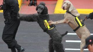 Brigada Canina de la Policía celebró 52 aniversario con singular exhibición