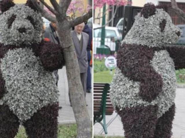 Alcalde de Surco reconoció que 'oso' fue regalo para Mariella Zanetti